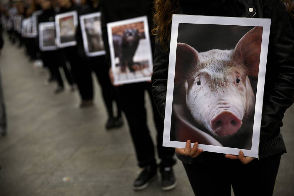 Animal right activists protesting whilst holding pictures of abused animals during a gathering in Madrid, Spain. The animals displayed at the demonstration were discarded by animal farms and collected from waste bins