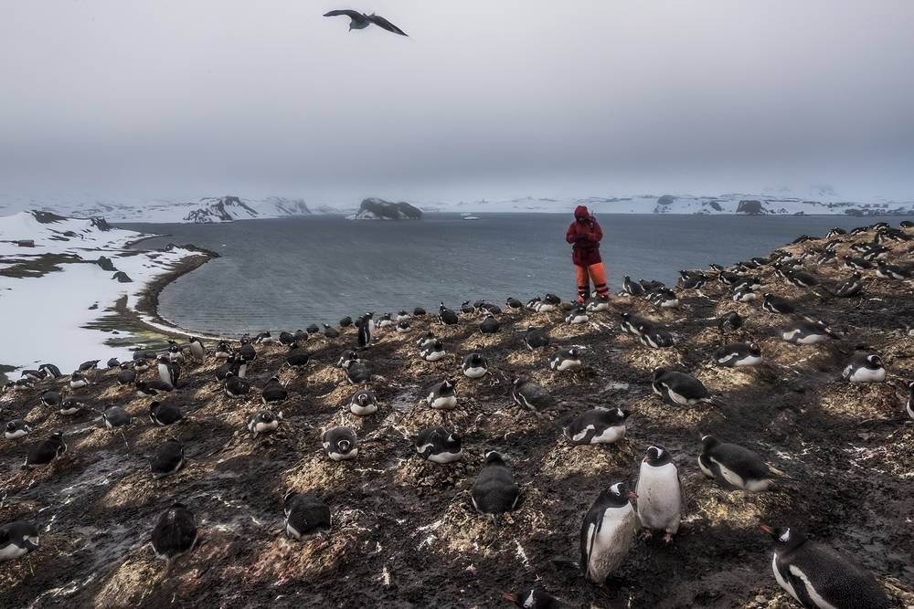 Daniel Berehulak for the New York Times, First Prize Stories in the Daily Life Category. The picture shows a Member of a German research team from the Friedrich Schiller University Jena, counting the number of penguin species and pairs as part of ongoing research on bird and penguin species in Antarctica, on 7th of December, 2015 on Ardley Island, Antarctica