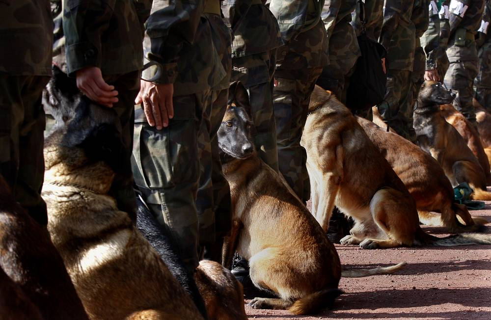Drugs-sniffing dogs taking part in a training at a military base in Mexico City