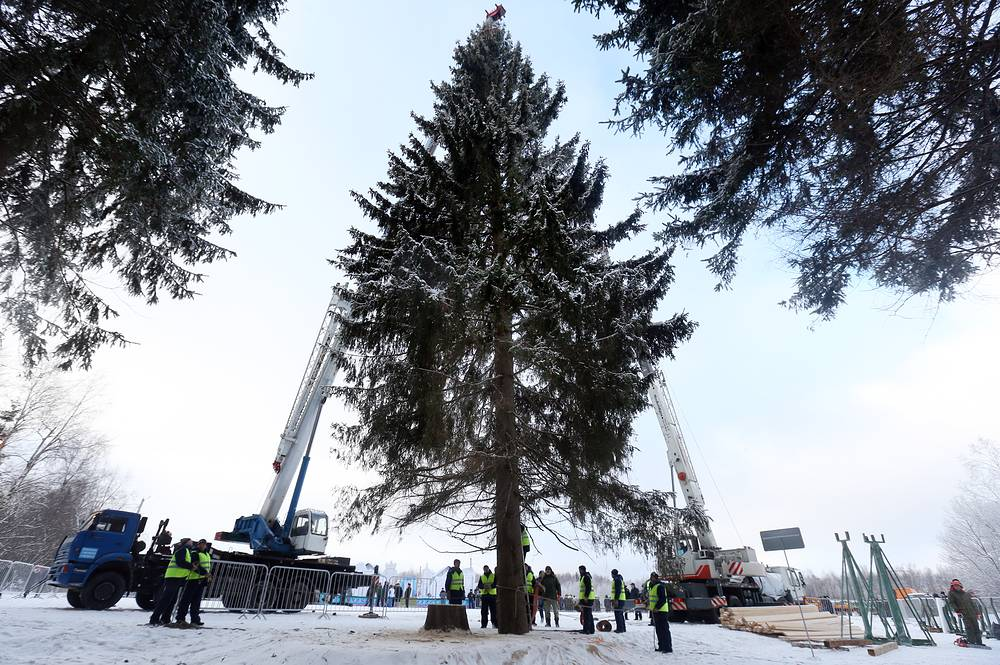 Cutting down Russia's main Christmas tree during a ceremony in the woods of Istrinsky District