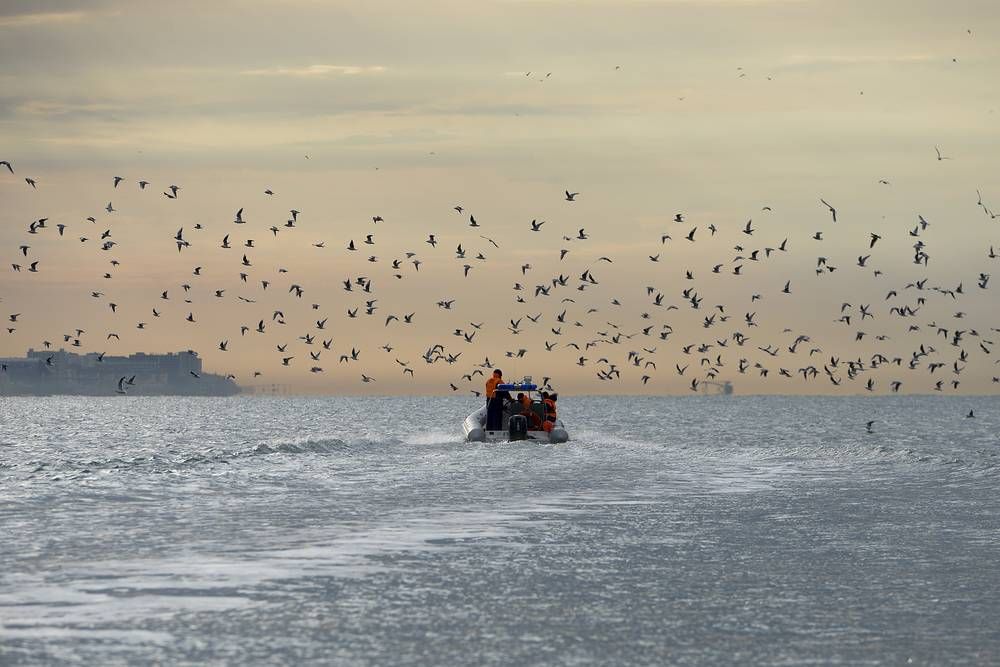 Birds fly over a Russian Emergency Ministry rescue boat searches for wreckage from the crashed plane in the Black Sea, Russia, December 27