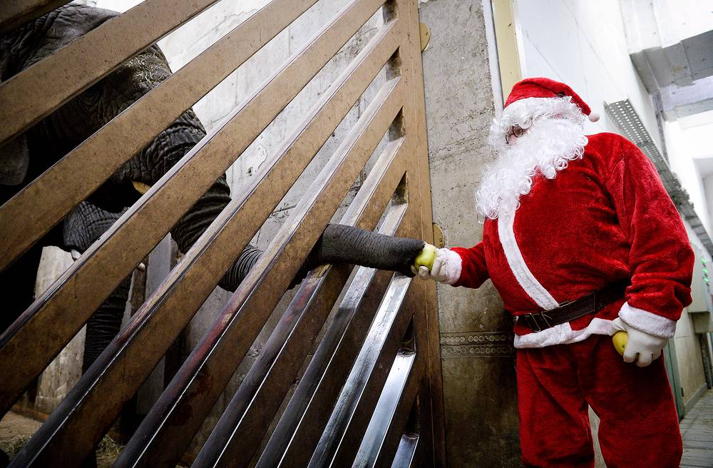 A man dressed as Santa Claus feeds an elephant in the Warsaw Zoo, Poland