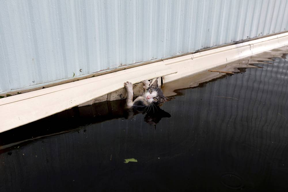 A cat clings to the side of a trailer amidst flood waters before it was saved in Burgaw, North Carolina