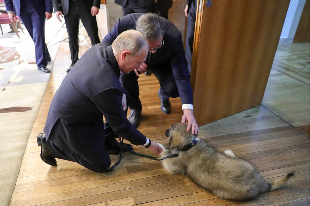 Russia's President Vladimir Putin pets a puppy of the Yugoslavian Shepherd (Sarplaninac) presented to him as a gift during a meeting with Serbia's President Aleksandar Vucic in the National Assembly building in Belgrade, January 17