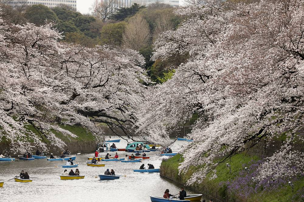 People looking at cherry blossoms from boats on the water of Chidorigafuchi moat in Tokyo, Japan