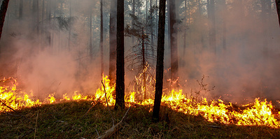 Wildfires sweep through 8,800 hectares in Russian regions