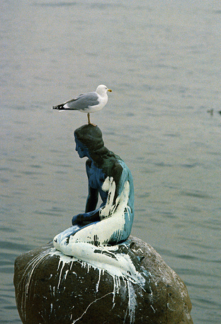 """A sea gull rests on the head of the """"little mermaid"""" statue in Copenhagen, Denmark on Feb. 7, 1972 after the harbor landmark was splashed with white paint"""