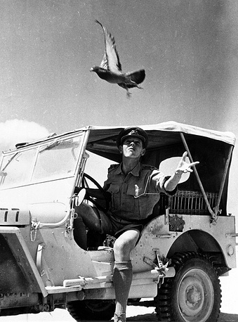 Military pigeon postal service of the US Army in Egypt, 1943