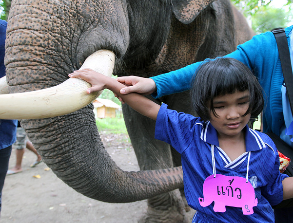 Photo: A blind Thai student touches the tusk of an elephant during elephant therapy for disabled children at Thai Elephant Centre for Conservation, Thailand, 16 August 2011