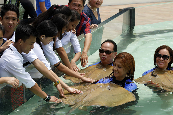 The Manila Ocean Park is 8,000 square meters complex which have 300 species of marine life to view and possibility to interact with sharks and rays inside