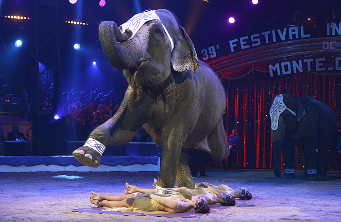 Performance with an Asian elephant trained by Elvis Errani