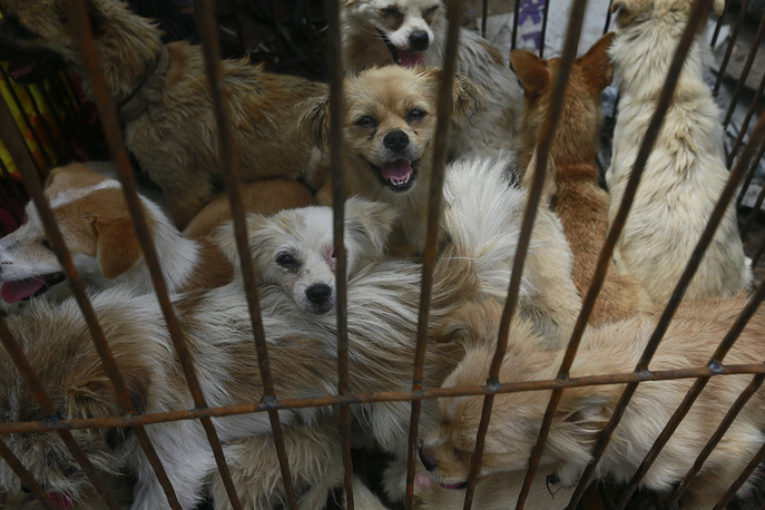 """Dogs being transported for """"dog meat festival"""" at Yulin Big Market in Yulin, China. """"Dog meat festival"""" in China often evoke large protests, international media coverage and thousands petitions calling to stop dogs killing"""
