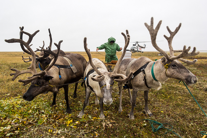 A Nenets reindeer herder visited by electoral officials in tundra as part of early voting ahead of the 2016 Russian State Duma elections, September 13