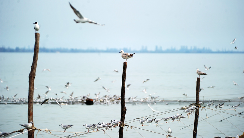 Seagulls sitting and flying over the water in Sukhumi