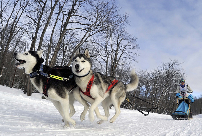 A dog sled race in Kamchatka