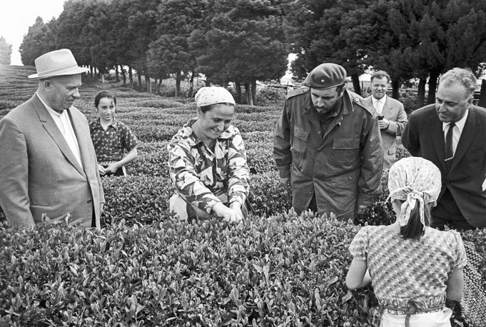 Soviet leader Nikita Khrushchev and Cuban leader Fidel Castro visiting tea plantation in Gudauta region, Abkhazia, 1963