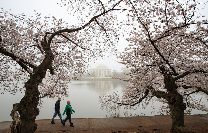Early morning fog softens the tone of cherry blossoms along Potomac River near the Jefferson Memorial, Washington DC, USA