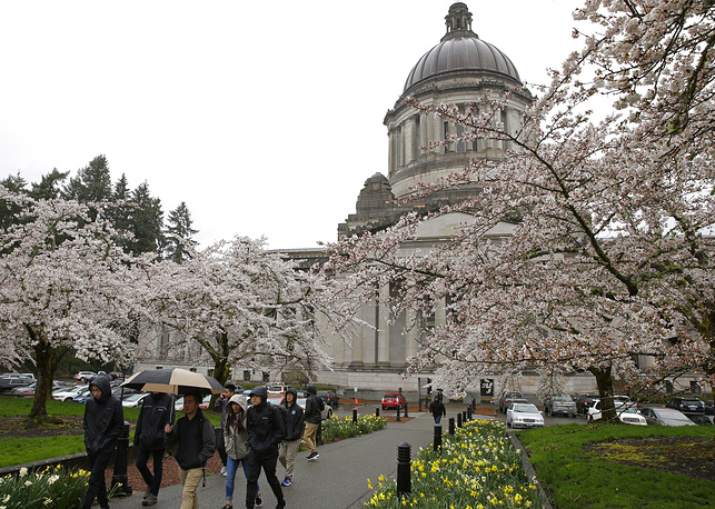Pedestrians walk in the rain near the Legislative Building at the Capitol, as cherry trees display their spring blossoms in Olympia, Washington, USA