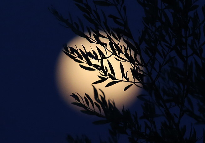 A full moon seen through tree branches in the sky over Nicosia, Cyprus