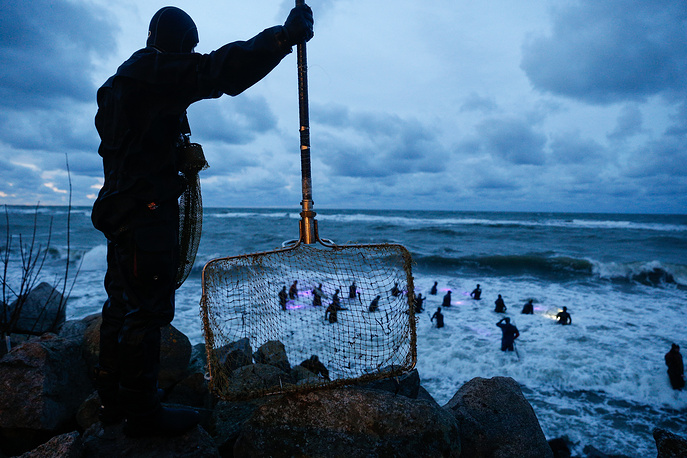 Collecting amber along the Baltic coast of the Kaliningrad region, October 31
