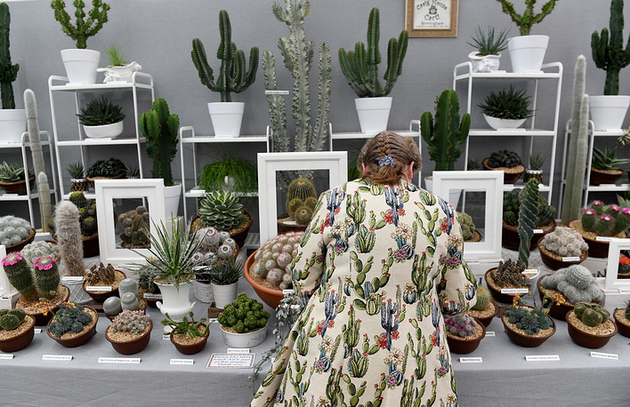 A worker puts the final touches to a cactus stand at the RHS Chelsea Flower Show