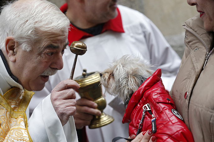 A priest blesses a dog during Saint Anthony of Abbot celebrations in Saint Anthony of Abbot church in Madrid, January 17