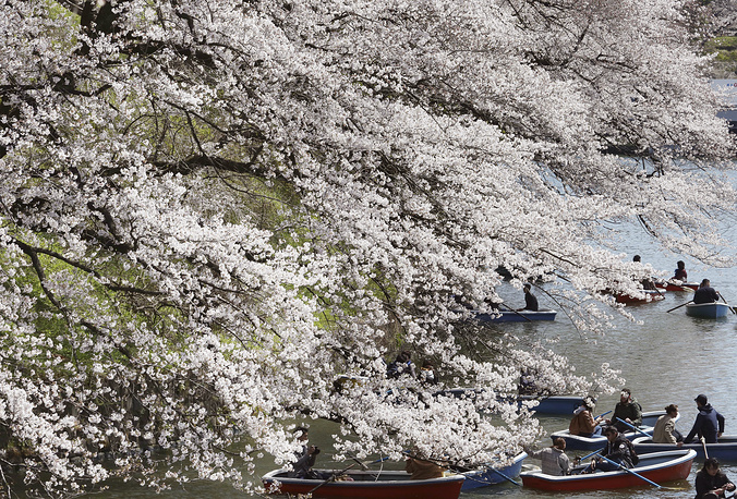 People on boat enjoying blooming cherry blossoms along the Chidorigafuchi Imperial Palace moat in Tokyo, April 3