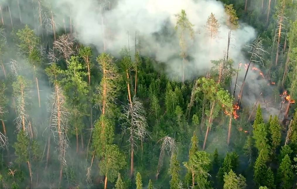 Firefighters combat blazes engulfing 163,100 hectares in Russian