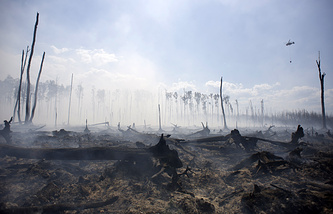 Forest in Tver region affected by wildfires