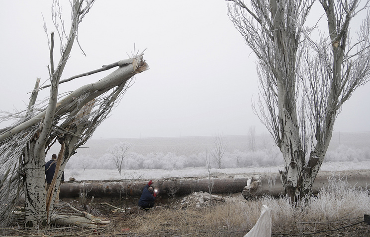 Trees damaged in shelling in eastern Ukraine