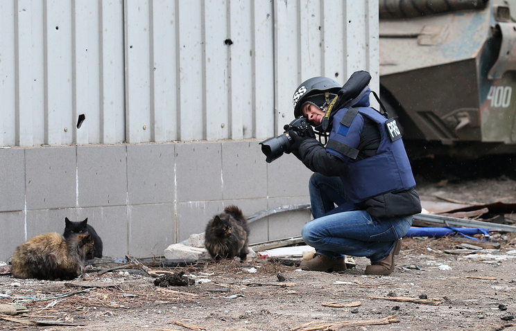 A journalist taking pictures of cats near the Donetsk airport